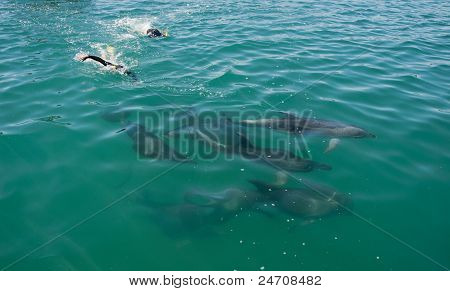 Swimming with Bottlenose Dolphins, New Zealand