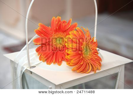 Orange Red Flowers