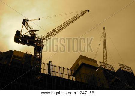 Backlit Sepia Cranes