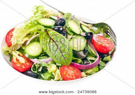 Fresh Green Mesclun Salad Close Up