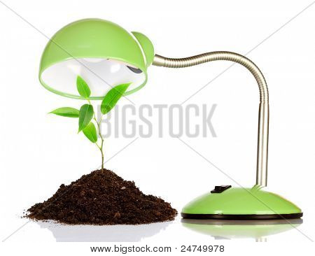 Young sprout and table lamp on a white background ...