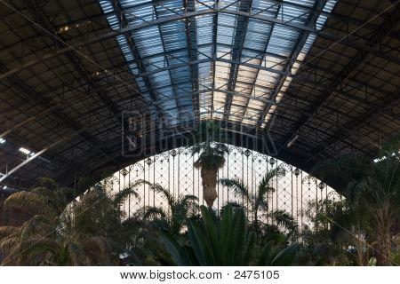 Atocha Station Palms