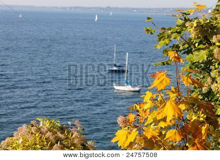 fall leaves at bellingham bay