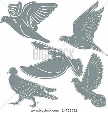 Pigeons, a bird symbol, the illustration. V-Formation, Animal
