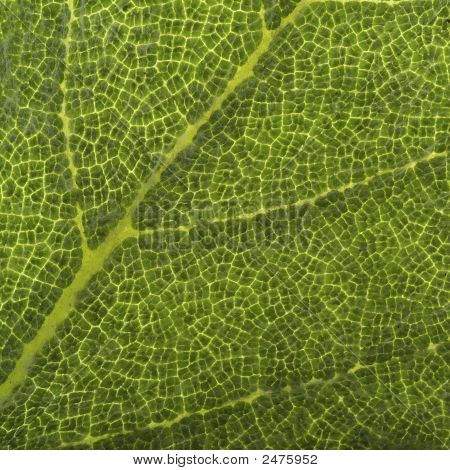 Extreme Close Up Of Leaf