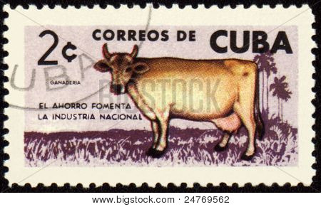 Cow On Post Stamp