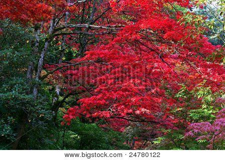 Arboretum,Seattle Japanese Garden #5