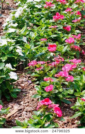 Rosa und weiße Blüten In Pinienrinde