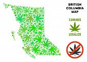 Royalty Free Cannabis British Columbia Province Map Mosaic Of Weed Leaves. Concept For Narcotic Addi poster