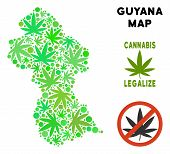 Royalty Free Cannabis Guyana Map Mosaic Of Weed Leaves. Template For Narcotic Addiction Campaign Aga poster