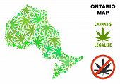 Royalty Free Cannabis Ontario Province Map Collage Of Weed Leaves. Template For Narcotic Addiction C poster