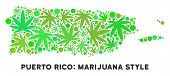 Royalty Free Cannabis Puerto Rico Map Mosaic Of Weed Leaves. Template For Narcotic Addiction Campaig poster