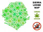 Royalty Free Cannabis Sierra Leone Map Composition Of Weed Leaves. Concept For Narcotic Addiction Ca poster