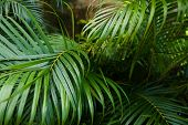 Palm Green Leaves Background Photo. Concept Of Botany And Foliage. poster