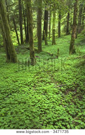 Pacific Northwest Forest Floor