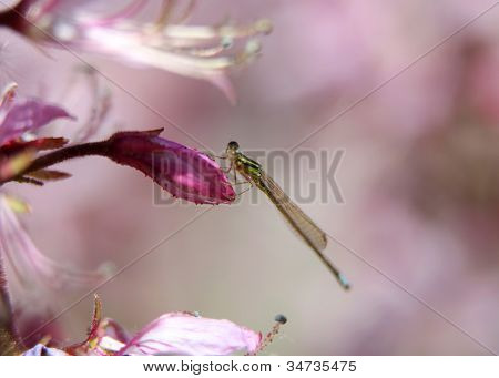 Tiny dragon fly on flower bud