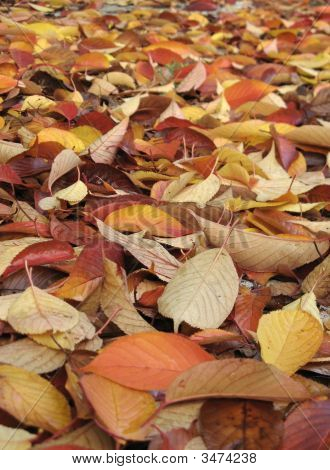 Wet Autumnal Leaves