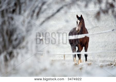 Winter Horse Series