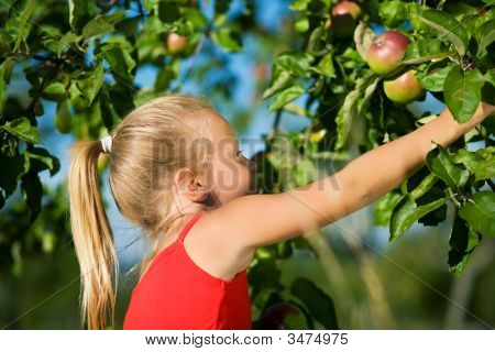 Grabbing The Apple