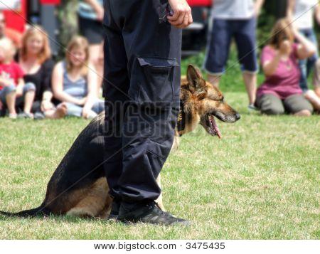 Training A Police Dog