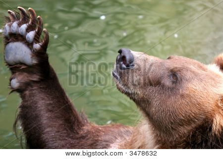 Funny Brown Bear