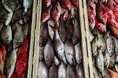 The Market For Marine Fish. Street Market. Sale Of Fresh Fish. Freshly Caught Fish. Fish Shop. Produ poster
