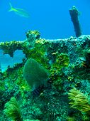 image of coral reefs  - Shots of scuba diving in the Florida keys