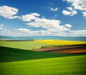 Vivid green field on the springtime and fluffy white clouds on a sunny day. Location place of Ukrain poster