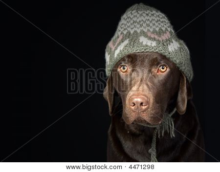 Cute Labrador In Winter Hat