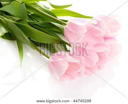 Beautiful bouquet of pink tulips, isolated on white