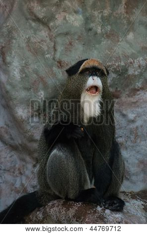 Monkey sitting on a stone