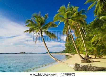 Coconut Coast Jungle Lagoon