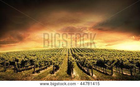 Beautiful Vineyard Sunset in South Australia