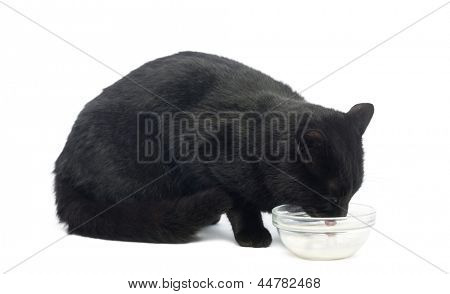 Black cat dinking milk, isolated on white