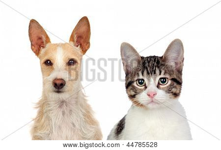 Close-up Of Cat And Dog Isolated Over White Background