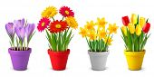 foto of pot  - Collection of spring and summer colorful flowers in pots - JPG