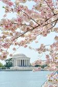 pic of thomas jefferson memorial  - Thomas Jefferson Memorial during cherry blossom festival in Washington DC United States - JPG