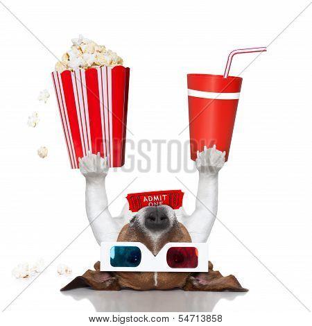 Movie Cinema Dog
