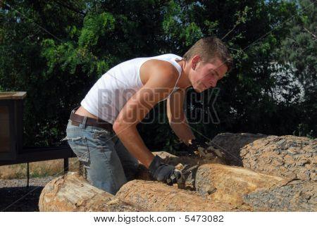 Scaling Tree Bark
