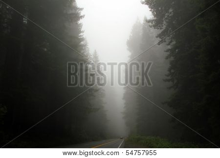 Redwood Highway in Foggy Mist