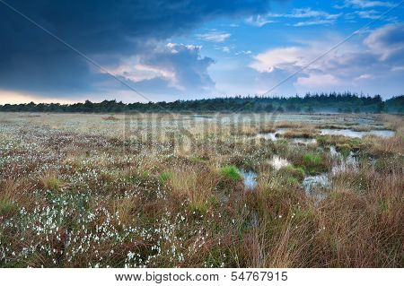 Rainy Sky Over Swamp With Cotton-grass