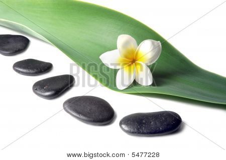 Lava Stones With Frangipani (plumeria)  Flower On The Leaves