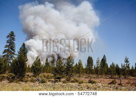 Beginning Fire