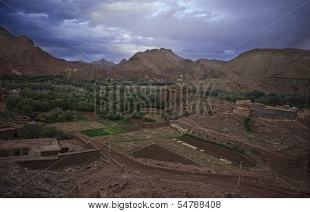 Dades Valley Farms