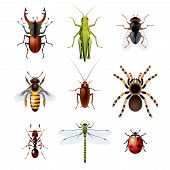Постер, плакат: Set Of Insects On White Background