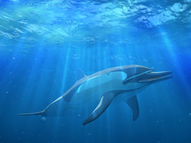 picture of cetacea  - 3 d Dolphin under water in blue sea - JPG