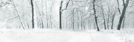image of sad christmas  - Panorama of winter forest with trees covered snow - JPG