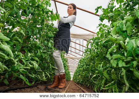 Wide angle view of female gardener checking plants