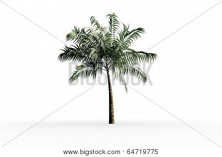 Tropical palm tree with green foilage on white background