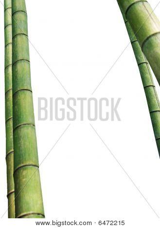 Bambus-frame